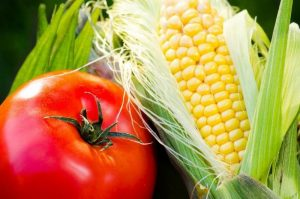corn and tomatoes sale in Jacksonville Beach FL