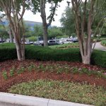 Jacksonville Commercial Landscaping by Rockaway