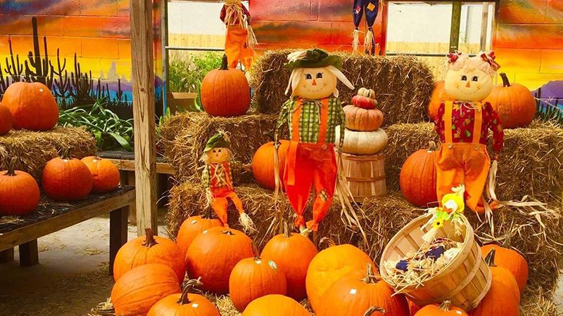 Fall Festival Jacksonville Beach