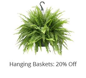 specials hanging baskets jacksonville beach